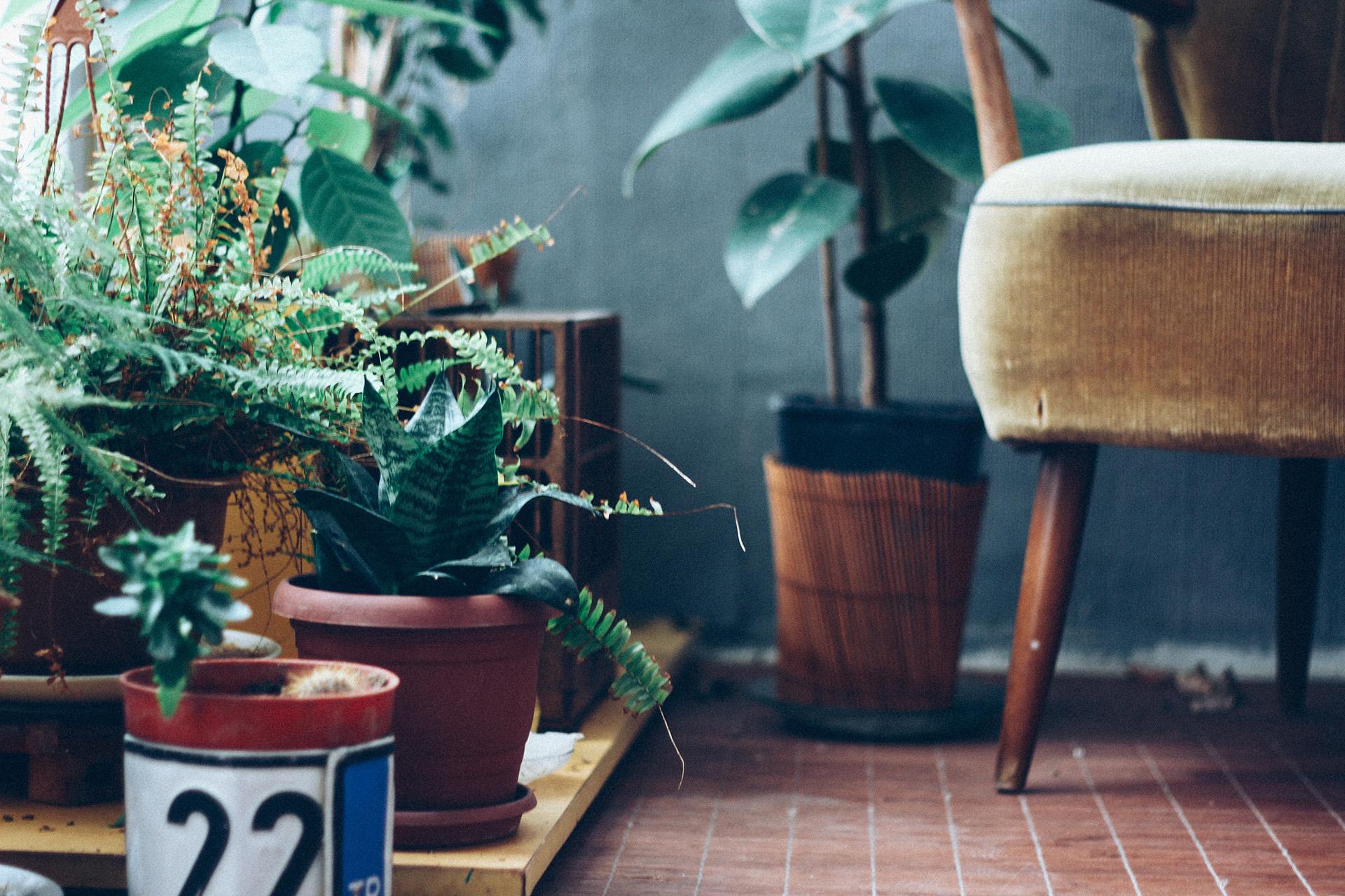 cum să decoram cu ajutorul plantelor